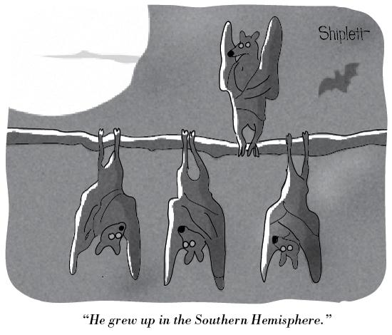 Bats-upside-down-550px